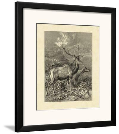 Vintage Roe Deer II-Friedrich Specht-Framed Art Print