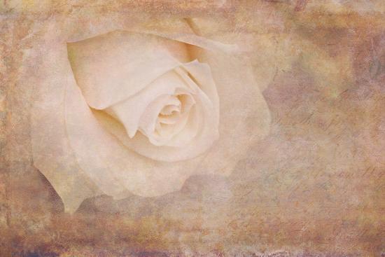Vintage Rose Card-Cora Niele-Photographic Print