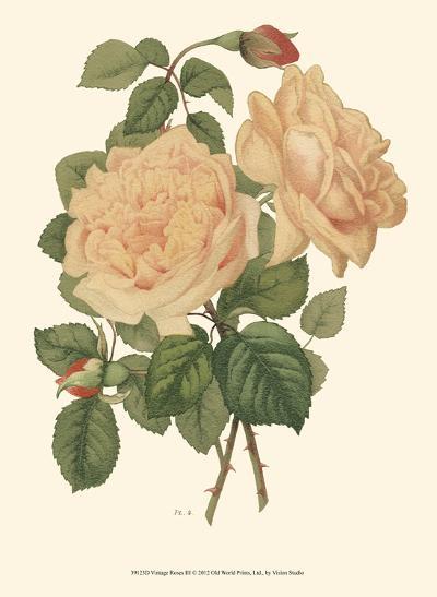Vintage Roses III--Art Print