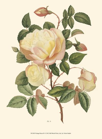 Vintage Roses IV--Art Print