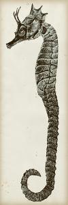 Vintage Seahorse I