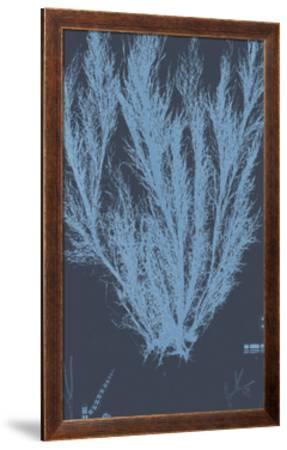 Vintage Seaweed - Wave-Henry Bradbury-Framed Giclee Print
