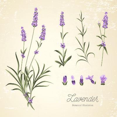 Vintage Set of Lavender Flowers Elements. Botanical Illustration. . Lavender Hand Drawn. Watercolor- Kotkoa-Art Print