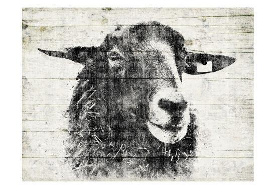 Vintage Sheep-Jace Grey-Art Print