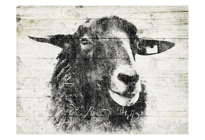 https://imgc.artprintimages.com/img/print/vintage-sheep_u-l-f8s74j0.jpg?p=0