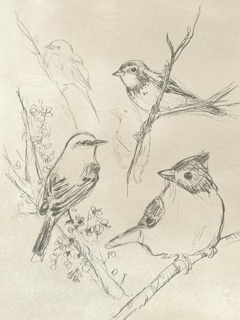 https://imgc.artprintimages.com/img/print/vintage-songbird-sketch-i_u-l-q1blh320.jpg?p=0