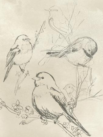 Vintage Songbird Sketch II-June Erica Vess-Art Print