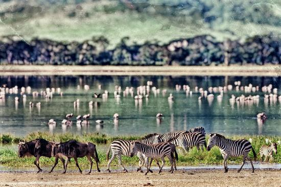 Vintage Style Image of Zebras and Wildebeests Walking beside the Lake in the Ngorongoro Crater, Tan-Travel Stock-Photographic Print