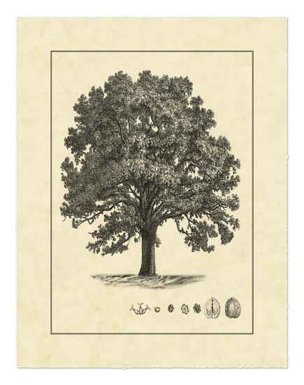 Vintage Tree I--Giclee Print
