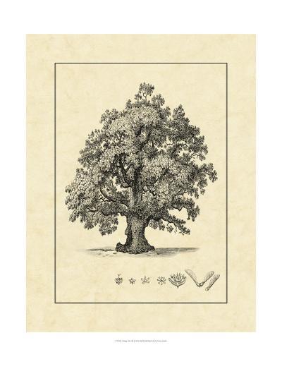 Vintage Tree III-Vision Studio-Art Print