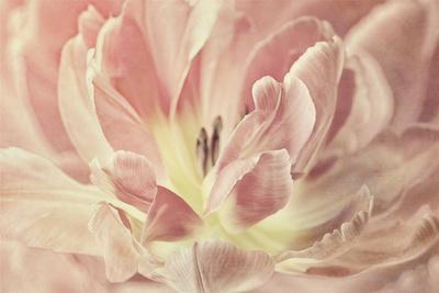 https://imgc.artprintimages.com/img/print/vintage-tulip_u-l-q12ub5q0.jpg?p=0