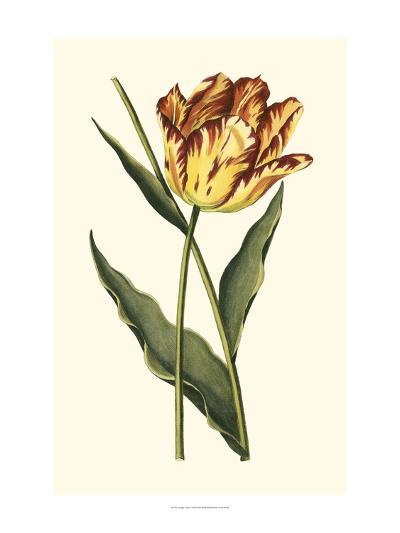Vintage Tulips I-Vision Studio-Art Print