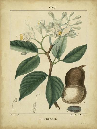 Vintage Turpin Botanical I-Turpin-Art Print