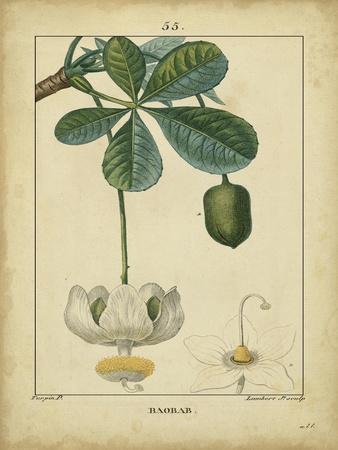 https://imgc.artprintimages.com/img/print/vintage-turpin-botanical-ii_u-l-pfse8n0.jpg?p=0