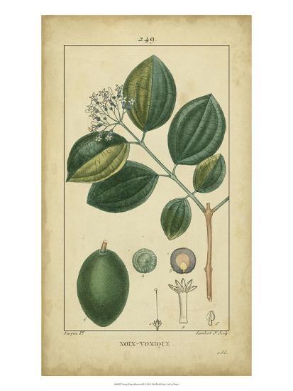 Vintage Turpin Botanical III-Turpin-Art Print