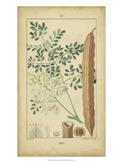 Vintage Turpin Botanical V-Turpin-Art Print