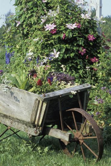 Vintage Wheelbarrow with Flowers--Photographic Print
