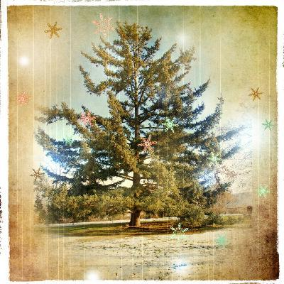 Vintage Winter Background With Pine Tree-Maugli-l-Art Print