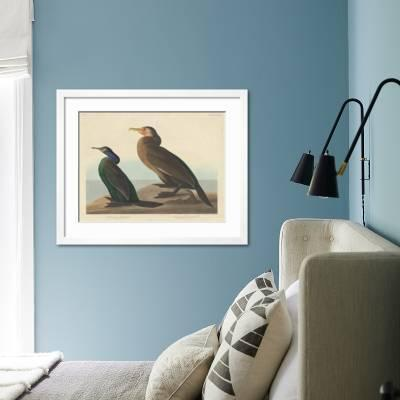 Violet Green Cormorant And Townsend S Cormorant 1838 Giclee Print John James Audubon Art Com
