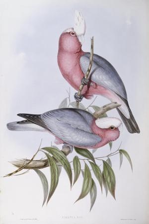 Violet-Necked Lory (Eos Squamata)-John Gould-Giclee Print