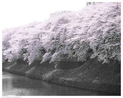 https://imgc.artprintimages.com/img/print/violet-reflections-i_u-l-f5uzzq0.jpg?p=0