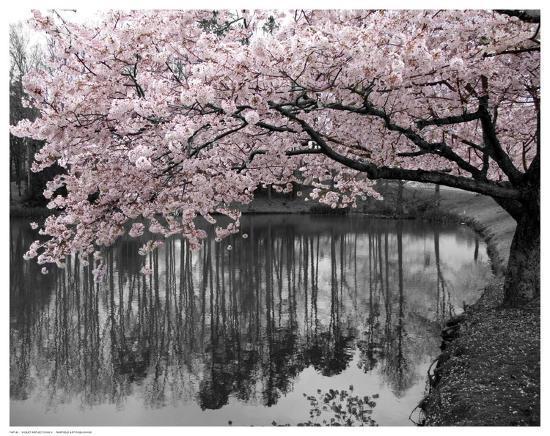 Violet Reflections II--Art Print