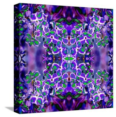 Violet Stars 3-Rose Anne Colavito-Stretched Canvas Print