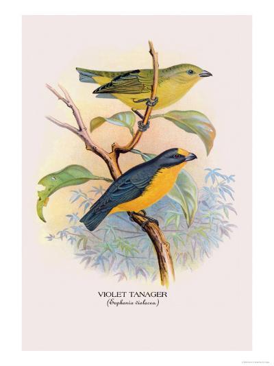 Violet Tanager-Arthur G^ Butler-Art Print