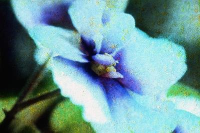 Violet-Andr? Burian-Photographic Print