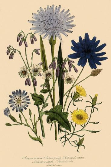 Viper Grass and Others--Giclee Print