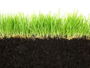 Cross-Section of Soil and Grass Isolated on White Background by viperagp