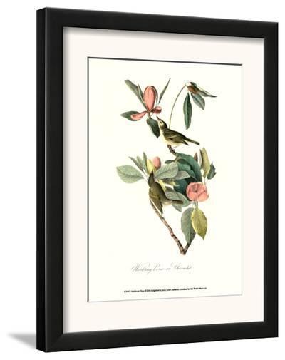Vireo-John James Audubon-Framed Art Print