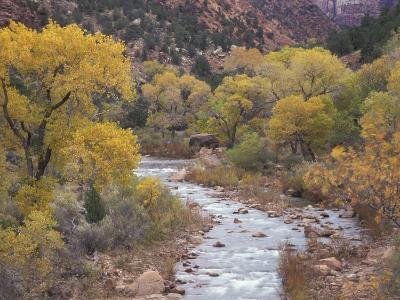 Virgin River and Fremont Cottonwoods, Zion National Park, Utah, USA-Jamie & Judy Wild-Photographic Print