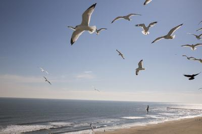 Virginia Beach, Virginia. Flock of Seagulls Fly over a Beach-Jolly Sienda-Photographic Print