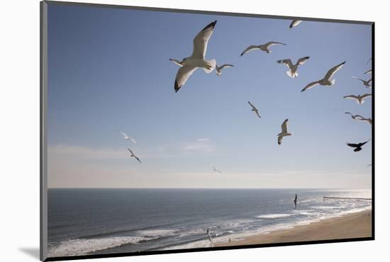 Virginia Beach, Virginia. Flock of Seagulls Fly over a Beach-Jolly Sienda-Mounted Premium Photographic Print