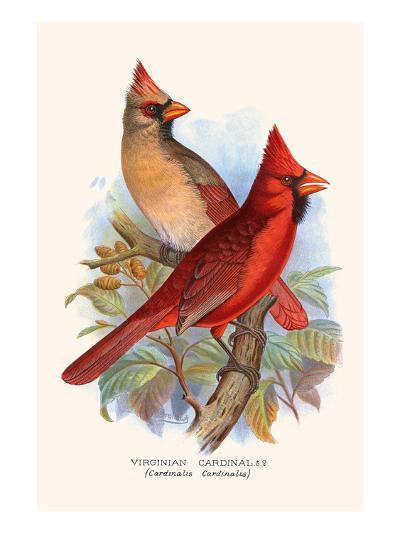 Virginian Cardinal-F^w^ Frohawk-Art Print