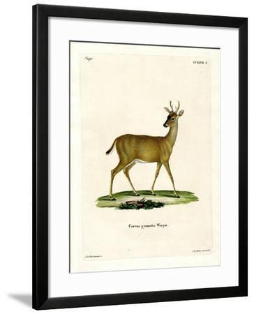 Virginian Deer--Framed Giclee Print