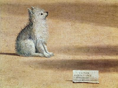 Vision of St. Augustine, Detail of the Dog, 1502-08-Vittore Carpaccio-Giclee Print