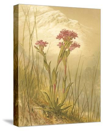 Alpine Florals II