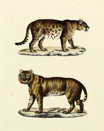 Animal Studies II