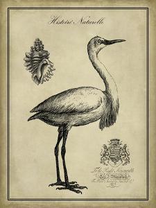Antiquarian Egret by Vision Studio