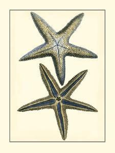 Antique Blue Starfish I by Vision Studio