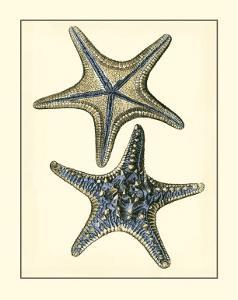 Antique Blue Starfish II by Vision Studio