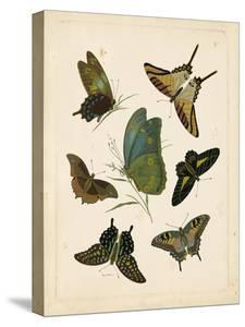 Antique Entomology I by Vision Studio