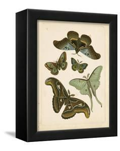 Antique Entomology II by Vision Studio