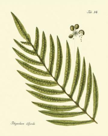 Antique Fern I