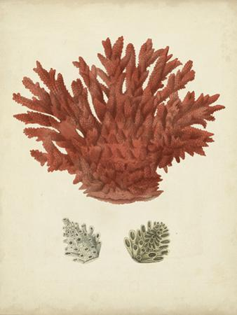 Antique Red Coral III by Vision Studio