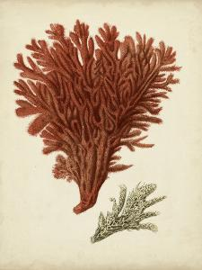 Antique Red Coral V by Vision Studio