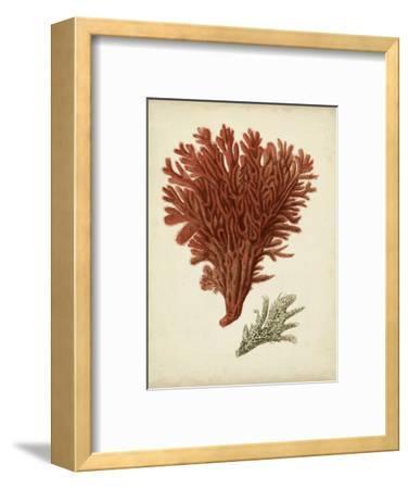 Antique Red Coral V