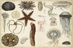 Antique Sealife Chart by Vision Studio